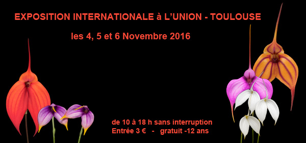 Expo internationale à L'Union (31), du 4 au 6 novembre 2016 Expo_2016